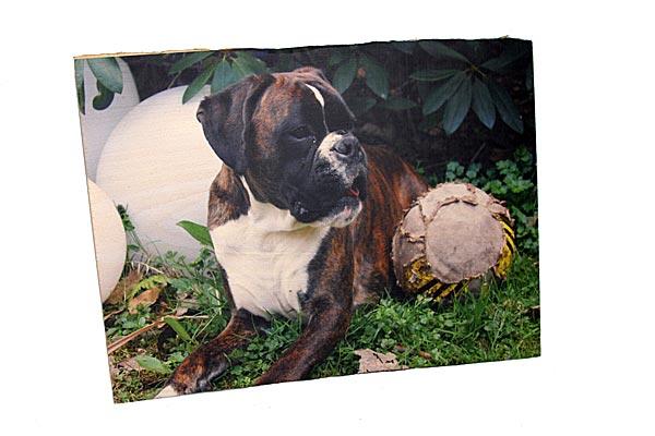Direktdruck von Natur-und Tierportraits auf echtem Buchenholz welches unbehandelt aus dem Schwarzwald stammt