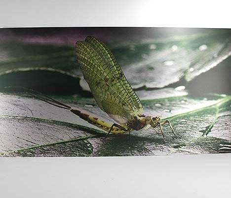 Eine fotografische Meisterleistung die wir auf Alu Dibond als Produkt realisieren durften